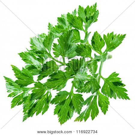 Parsley herb isolated on the white background. File contains clipping paths.