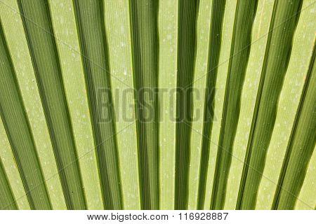 sunny palm leaf