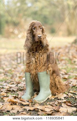 Funny Dog In Boots