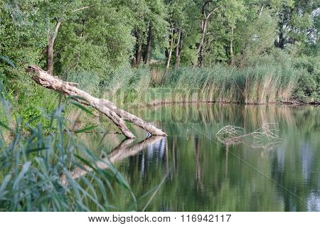 Lake With Fallen Tree Trunk