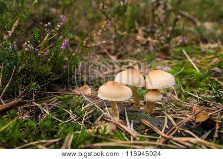 Mushrooms On Mossy Green Meadow