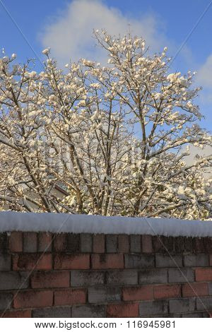 Snow on the Garden Wall