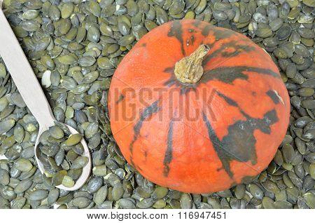 Pumpkin And Its Seeds
