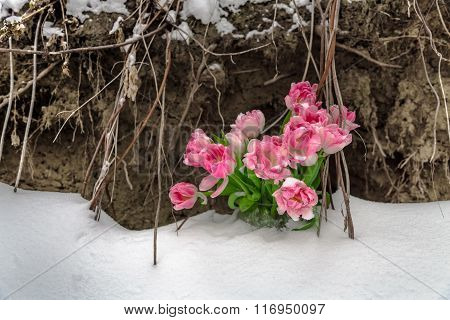 Fresh flowers in the snow on a grunge background