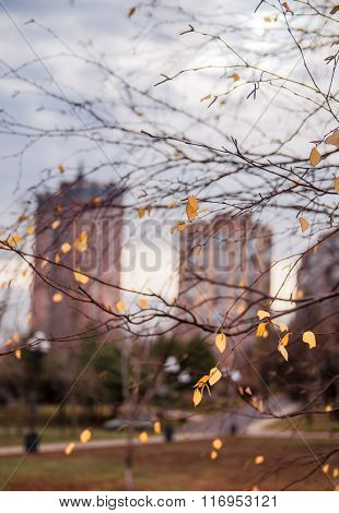 Urban Autumn Landscape, Birch Leaves Against The Autumn Sky