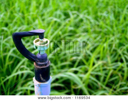 Sprenger im Gras