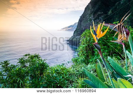 Strelitzia Blooming On Madeira, Portugal
