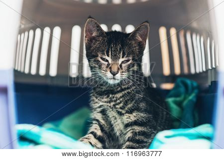 Small Striped Tabby Kitten In A Travel Crate