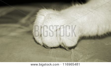 Close up of a cat claw with nail digging into material