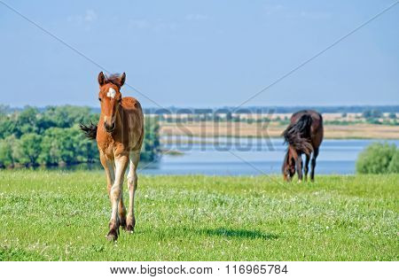 Horses graze near the river.