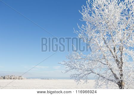 Frost covered tree in winter landscape