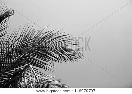 Palm leaves, retro stylization, close-up