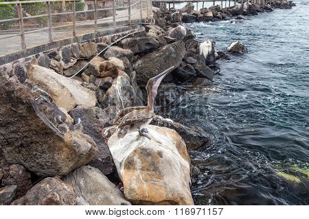 sea lions resting on rocks in san cristobal galapagos islands ecuador