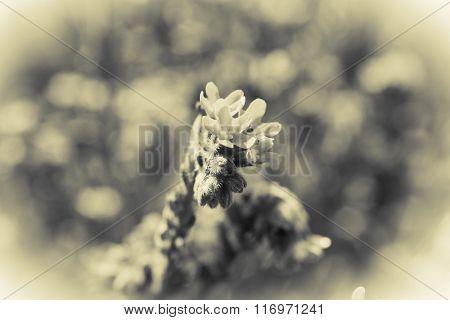 Closeup of beautiful wildflowers