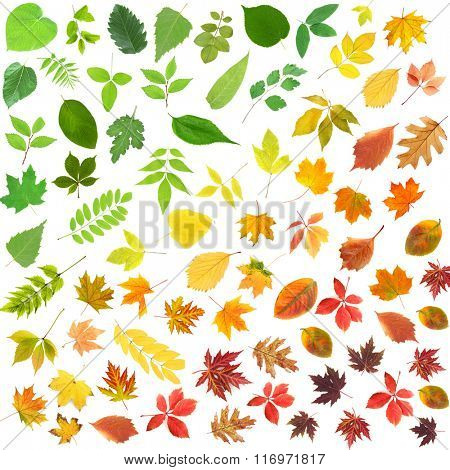 Different colorful leaves, isolated on white