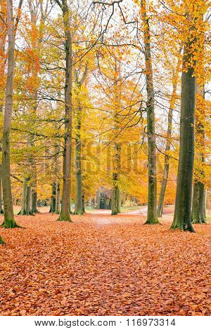 Fall in the forest from the Netherlands