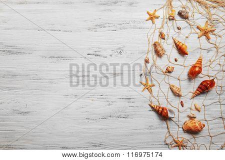 Seashells on light background
