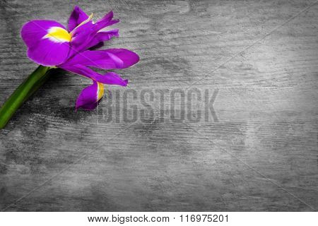 Beautiful iris flower on wooden background, copy space