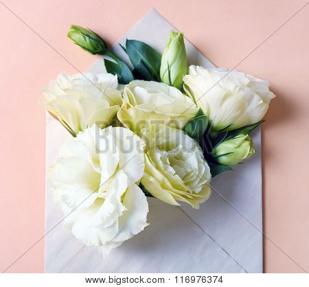 White eustoma in envelope on beige background