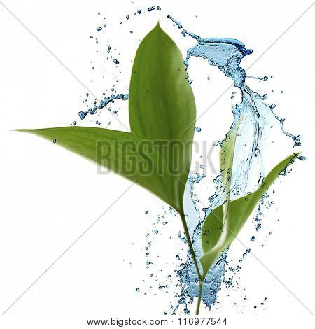 Branch with fresh green leaves and water splash, isolated on white