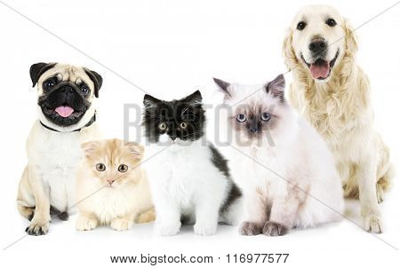 Cute cats and dogs, isolated on white