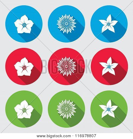 Flower icons set. Petunia chrysanthemum daisy orchid. Floral symbols. Round blue, red and green sign