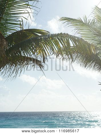 A tropical background with palm trees, blue skies, white clouds, and the blue ocean.