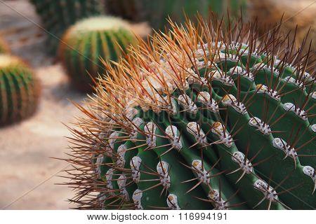 Part of green cactus
