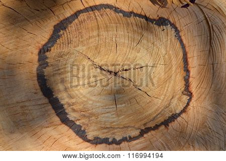 Texture of wood cut