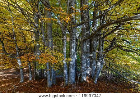 Beautiful Autumn Trees In A Mountain Forest. Horizontal Autumnal Scene With Colorful Leaves Backgrou