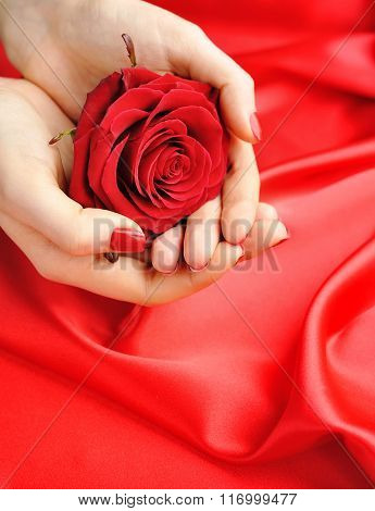 Red Rose In Female Hands On A Background Of Red Silk