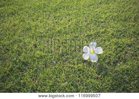 Cute Flower On Green.