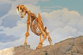 stock photo of sabertooth  - sabertooth tiger skeleton standing on a rock - JPG
