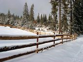 stock photo of winter scene  - winter scene with fence and green firs - JPG