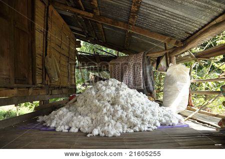 Cotton Material Process Group Pile