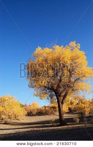 Yellow Leaves Tree