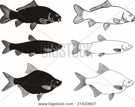 Fish - Carp, Grass Carp, Brea...