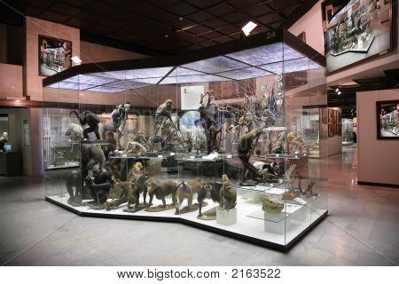 Exposición de primates