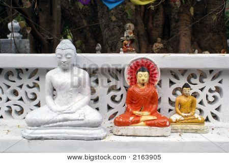 Buddhas Under The Tree