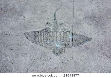 Manta Ray Imprint On Walkway