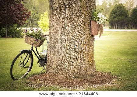 Old Bicycle Decorated With Flowers Leaning Against A Tree