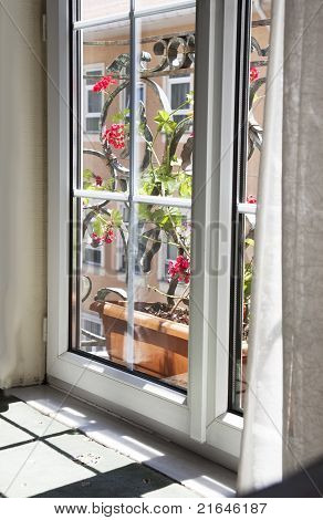 Red Flowers Through A Double Glazed Window
