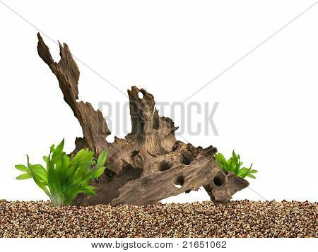 Aquarium Background