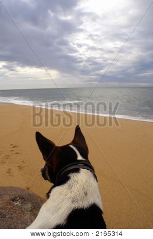 Dog On The Sea Shore