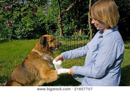 Young Woman Is Helping Her Dog