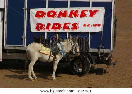Donkey Rides 02