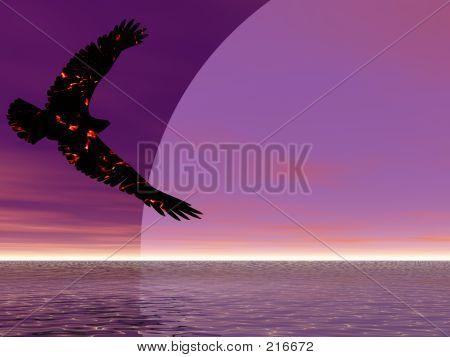 Fire Eagle aufsteigend
