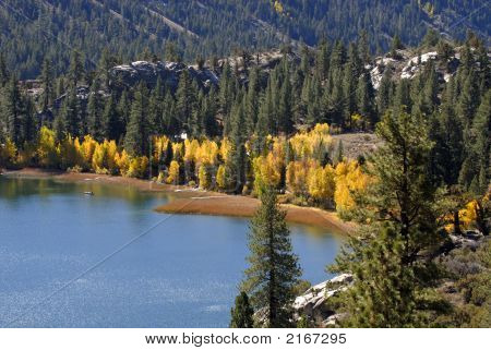 Yellow Aspen Trees On Shoreline