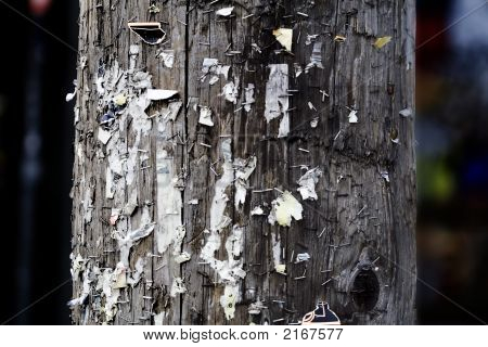 Staples on a wooden hydro pole pole
