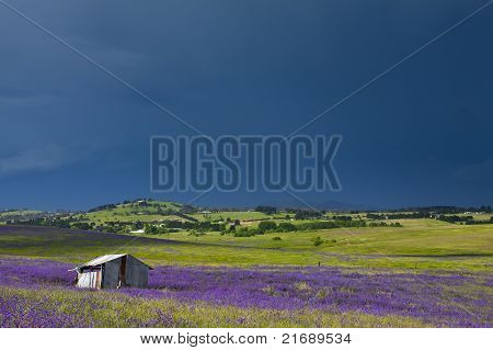 Hut in purple field
